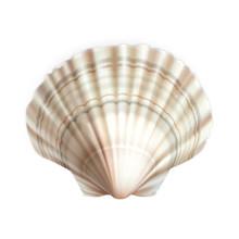 Scallop Shell Decorative Ocean...