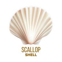 Scallop Shell Ocean Mollusk Pr...