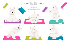 Yoga Dogs Poses And Exercises Poster Design. West Highland White Terrier Clipart