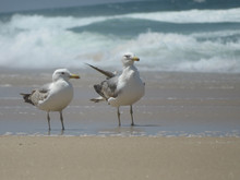 Two Seagulls Standing On The Beach