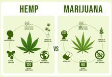 Hemp Vs Marijuana Infographics...