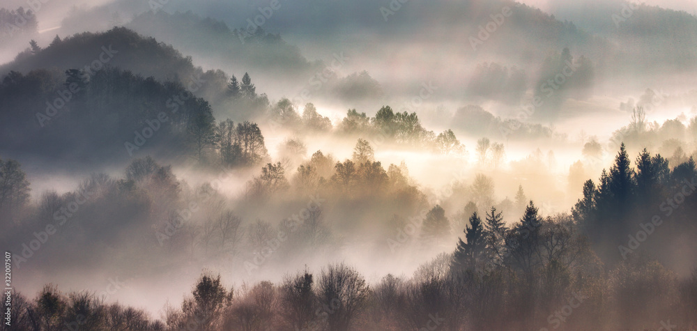 Fototapeta Mist in forest with sunbeam rays, Woods landscape