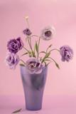 Beauty Eustoma flower, сhinese rose