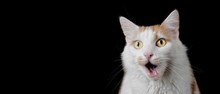 Funny Tabby Cat Looking Surpri...