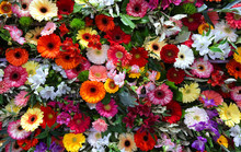 Various Color Gerbera Flower B...