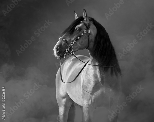 Fototapety, obrazy: Spanish horse in baroque bridle in light smoke.