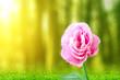 Leinwanddruck Bild - Pink Eustoma flower on the field