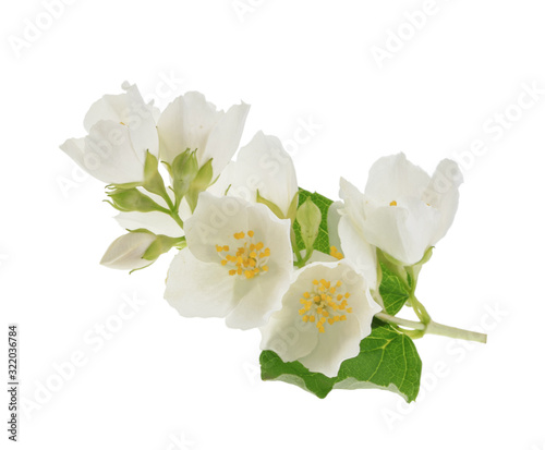 jasmine isolated on white background without shadow Tableau sur Toile