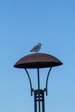 Sea Gull In A Street Light.