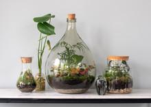Ecosystem Terrarium With Small...
