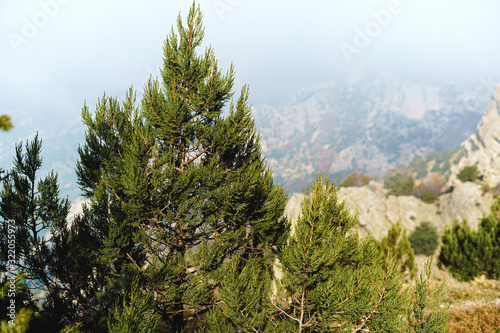 Fototapeta Beautiful mountain with forests in morning fog background obraz