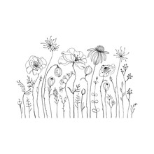 Hand Drawn Wildflowers And Pop...