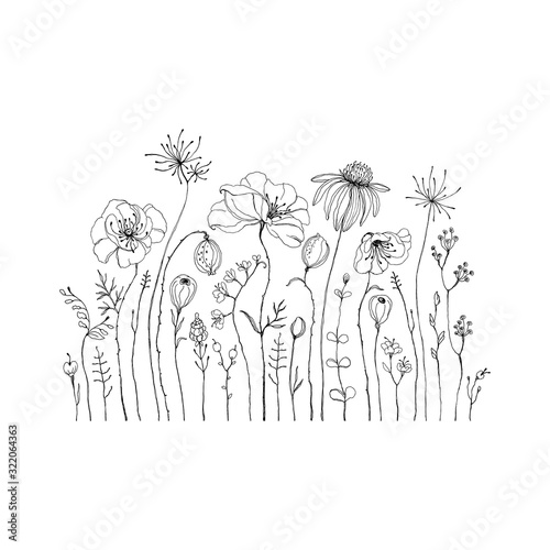 Fototapeta Hand drawn wildflowers and poppies. Decorative vector set in doodle style for your template. obraz