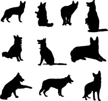 German Shepherd Silhouettes In Various Poses, Black On A Transparent Background
