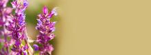 Wild Meadow Plants With Purple...