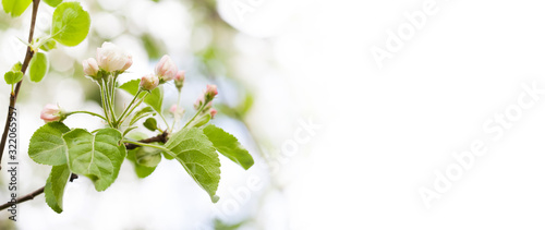 Stampa su Tela Spring tree with blossoming flowers