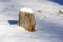 Old Wooden Stump Under Snow