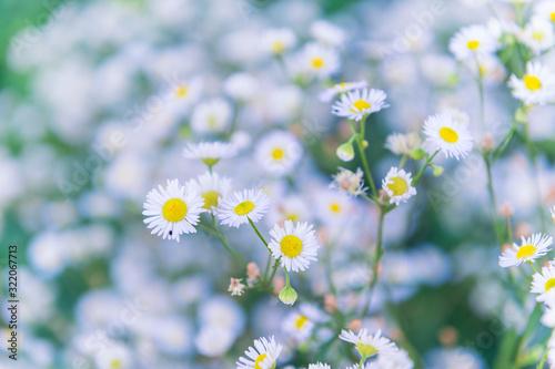Yellow white daisy flowers In the Garden Wallpaper Mural