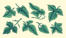 Set Of Grape Leaves. Vineyard ...