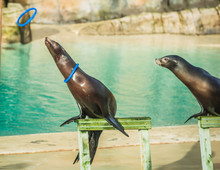 Image Of Two Sea Lions Or Seal...