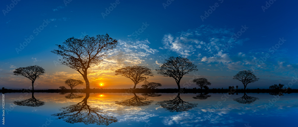 Fototapeta Panorama silhouette tree in africa with sunset.Tree silhouetted against a setting sun reflection on water.Typical african cool light sunset with acacia trees in Masai Mara, Kenya.