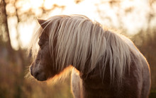 Adorable Brown Pony With Blue ...