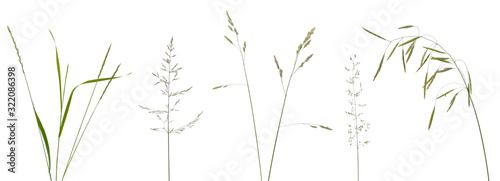 Photo Few stalks, leaves and inflorescences of meadow grass at various angles on white