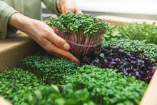 Organic Raw Food - Woman Take ...