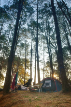 Nature Camping Tent With Green Tree On Grass Or Lawn With Camp Equipment In Pine Forest National Park With Morning Warm Sunlight For Family Vacation Picnic On Holiday Relax Travel At Phu Hin Rong Kla