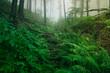 Leinwanddruck Bild lush forest wilderness landscape, green plants in woods