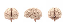 3D Set Glossy Brain Rendering Isolated On White Background