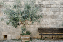 Old Bench And Olive Press On T...