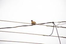 Woodpecker Bird On A Wire