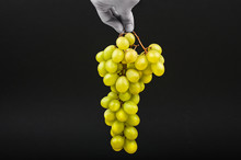 Yellow Grapes On A Black Background. A Hand Holds Grapes In The Air On A Black Background. Volumetric Winery. A Bunch Of Yellow Grape Bush.