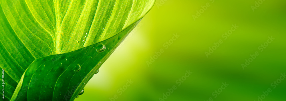 Fototapeta Green leaf with drops. Nature background. Saturation color.