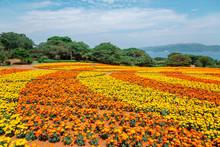 Nokonoshima Island Park Colorf...