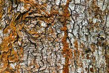 Tree Bark Texture Full Of Colors