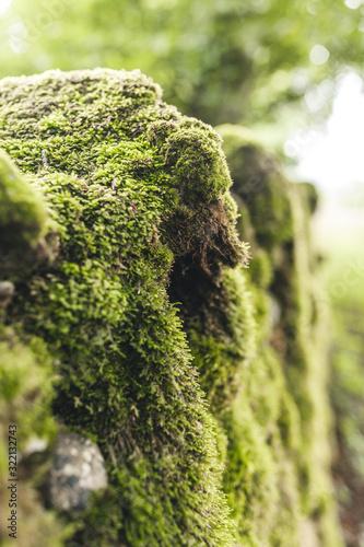 Fotografering mousse sur pierre