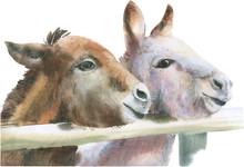 Сute Donkeys.