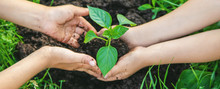 Children Plant Plants In The G...
