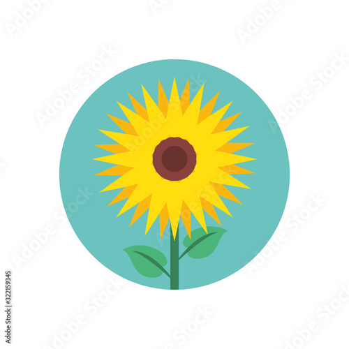 Fototapeta beautiful sunflower garden isolated icon obraz