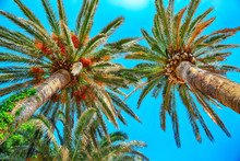 View Of Date Palm On Tree From...