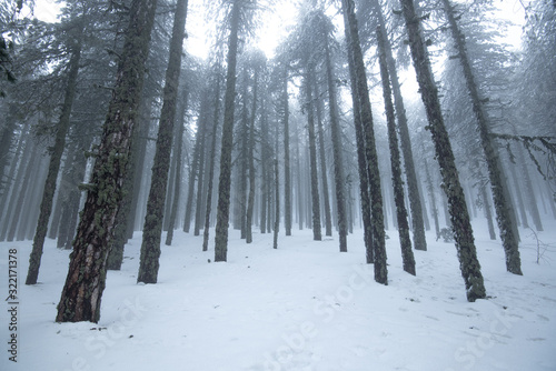Winter forest landscape with mountain covered in snow and pine trees Wallpaper Mural