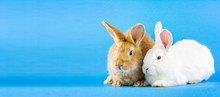 Two Small Fluffy Rabbits On A ...