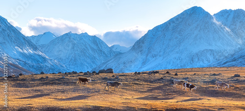 Photo Autumn mountain landscape with cows at sunset.