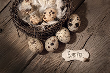 Quail Eggs In Nest With Feathe...