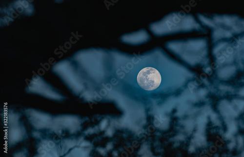 Canvastavla luna llena entre ramas