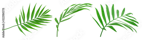 Green leaves of palm tree isolated on white background with clipping path Obraz na płótnie