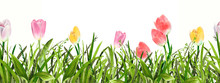Watercolor Grass With Tulips F...