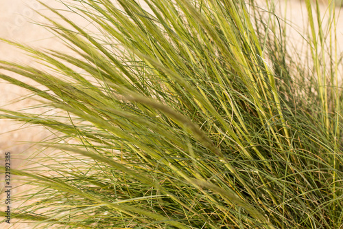 Valokuvatapetti Closeup of fresh thick grass, natural background